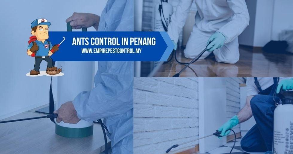 Ants Control Penang