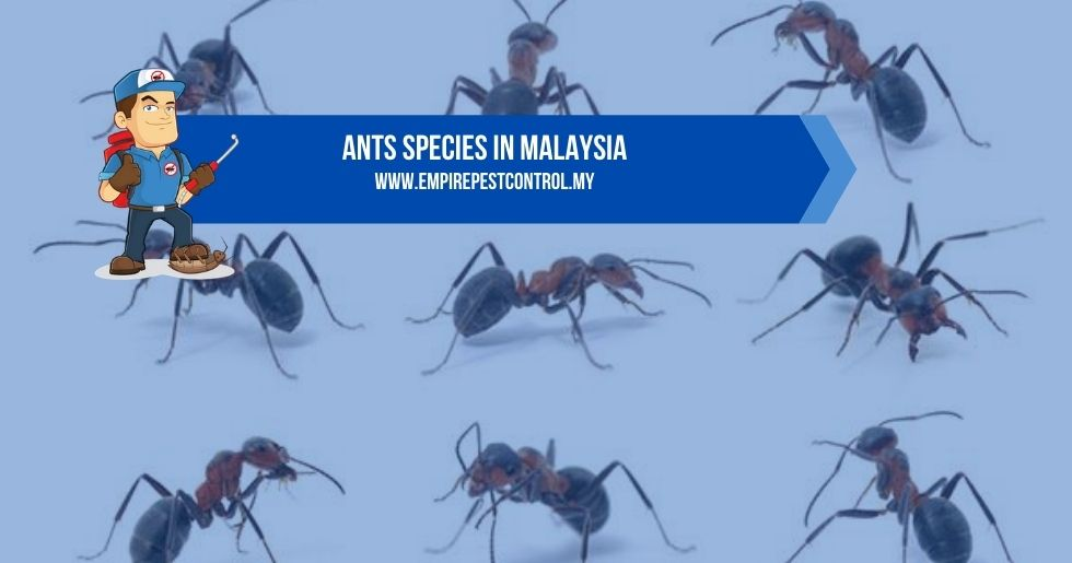 Ants Species in Malaysia