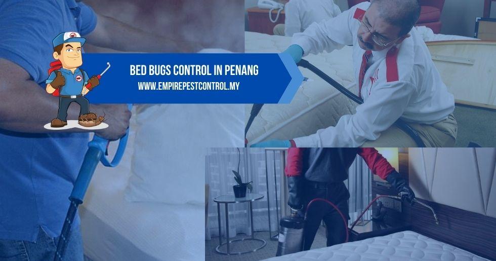 Bed Bugs Control Penang
