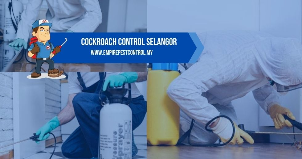 Cockroach Control Selangor