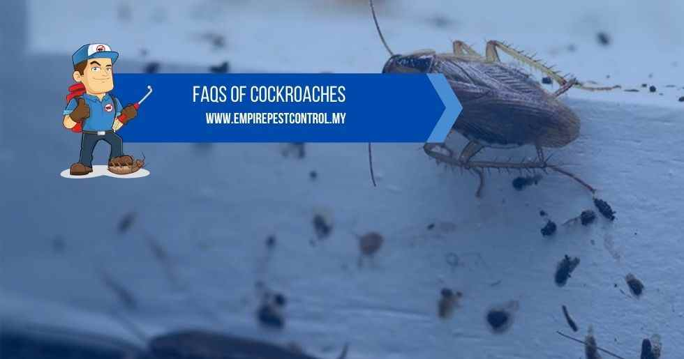 FAQs Of Cockroaches
