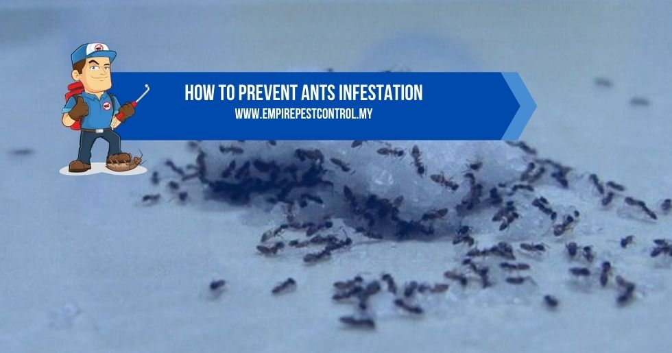 How To Prevent Ants Infestation