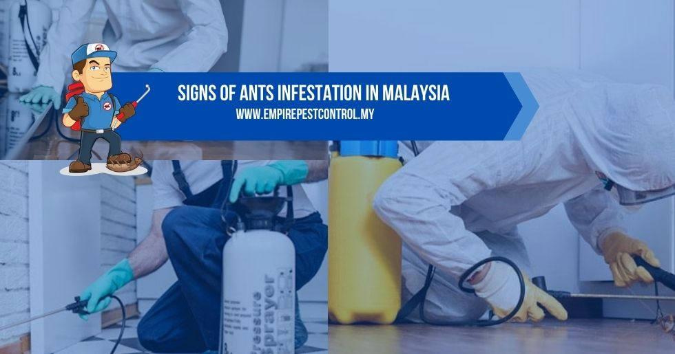 Signs Of Ants Infestation Malaysia