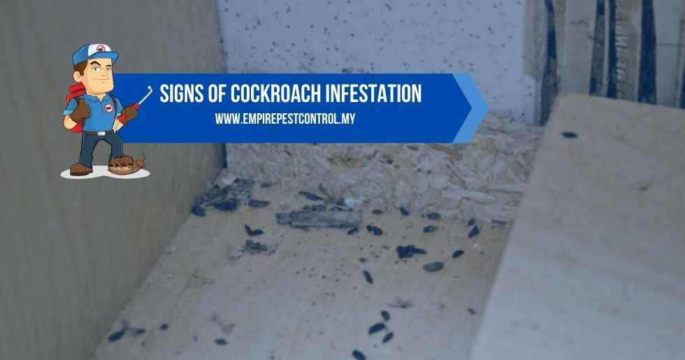 Signs Of Cockroach Infestation