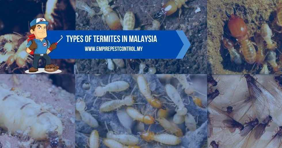 Types Of Termites in Malaysia