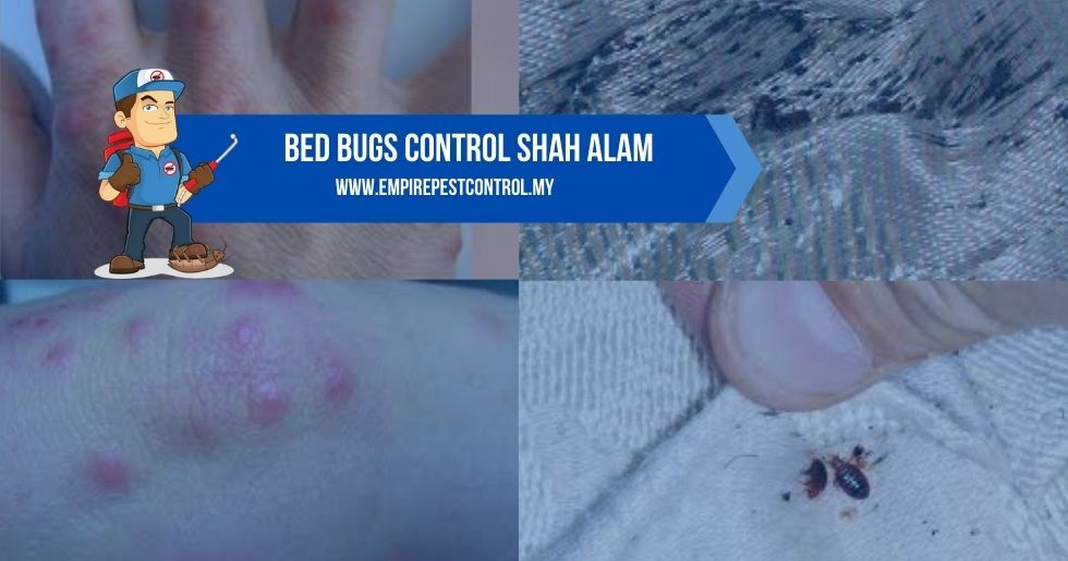 Bed Bugs Control Shah Alam