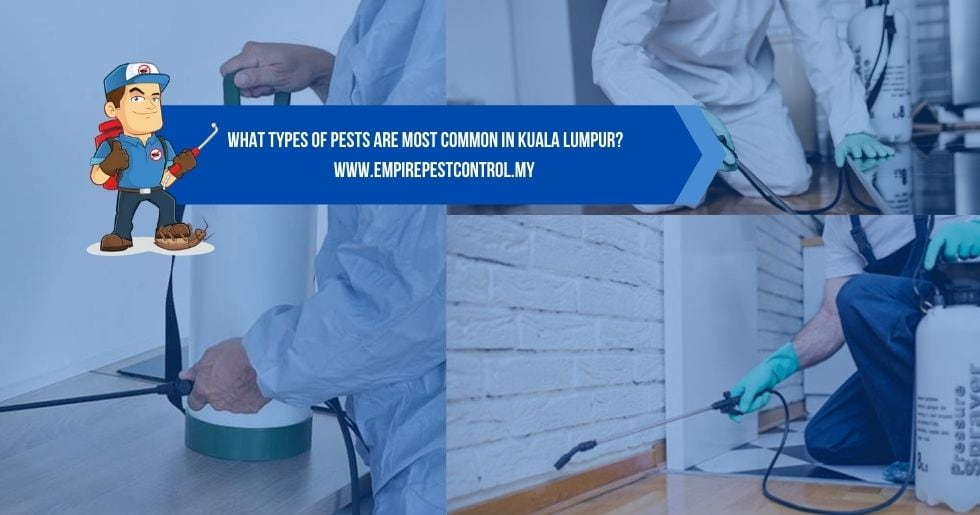 What Types of Pests Are Most Common in Kuala Lumpur