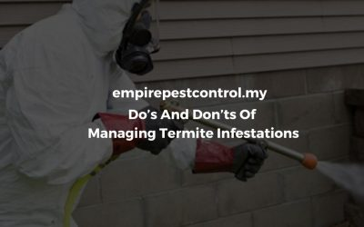 Do's And Don'ts Of Managing Termite Infestations