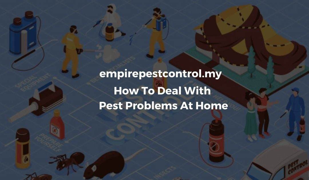 How To Deal With Pest Problems At Home Featured Image