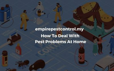 How To Deal With Pest Problems At Home in Selangor