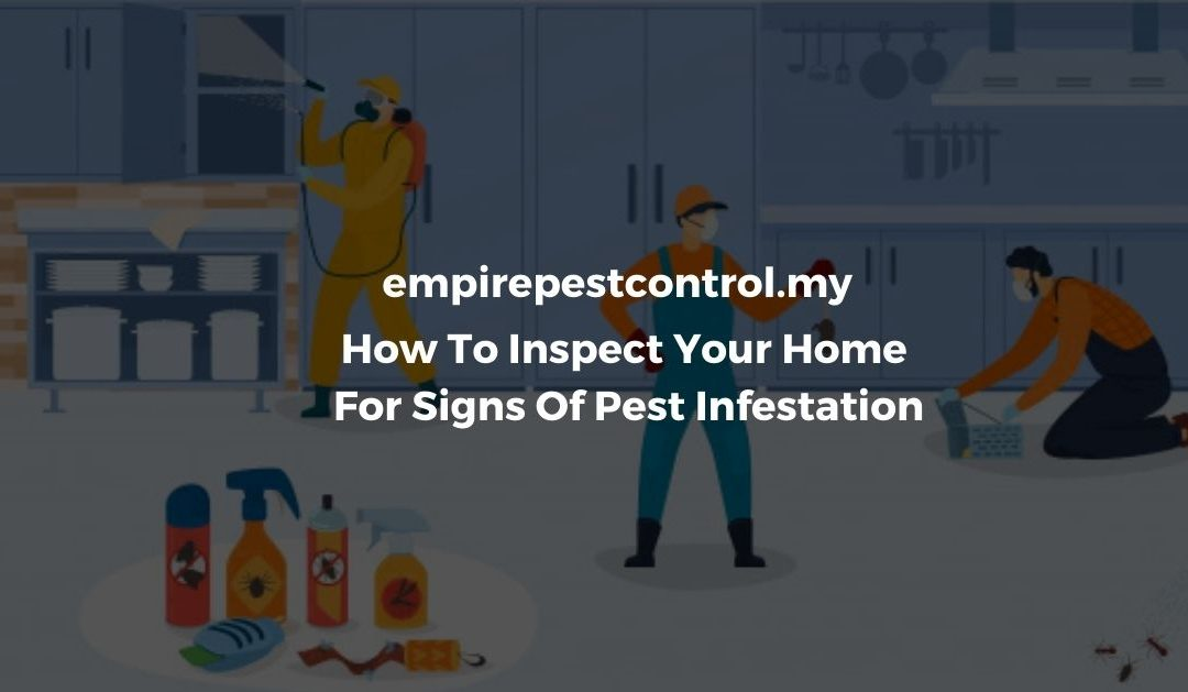 How To Inspect Your Home For Signs Of Pest Infestation Featured Image