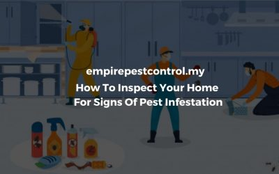 How To Inspect Your Home For Signs Of Pest Infestation