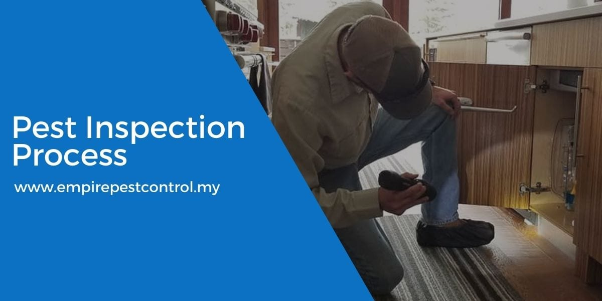 Pest Inspection Process