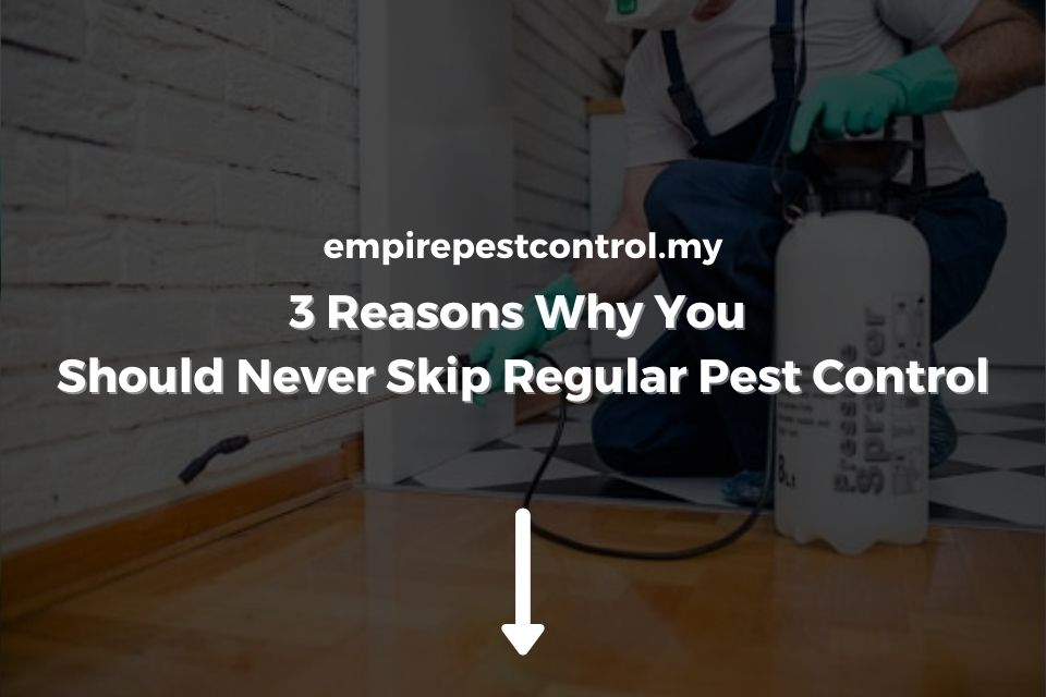 3 Reasons Why You Should Never Skip Regular Pest Control