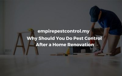 Why Should You Do Pest Control After a Home Renovation