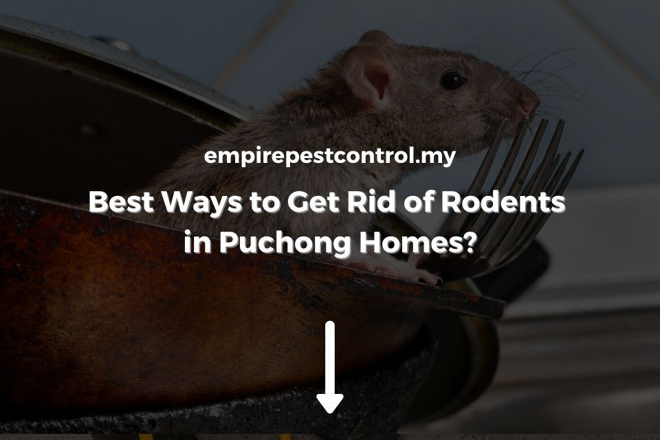 Best Ways to Get Rid of Rodents in Puchong Homes