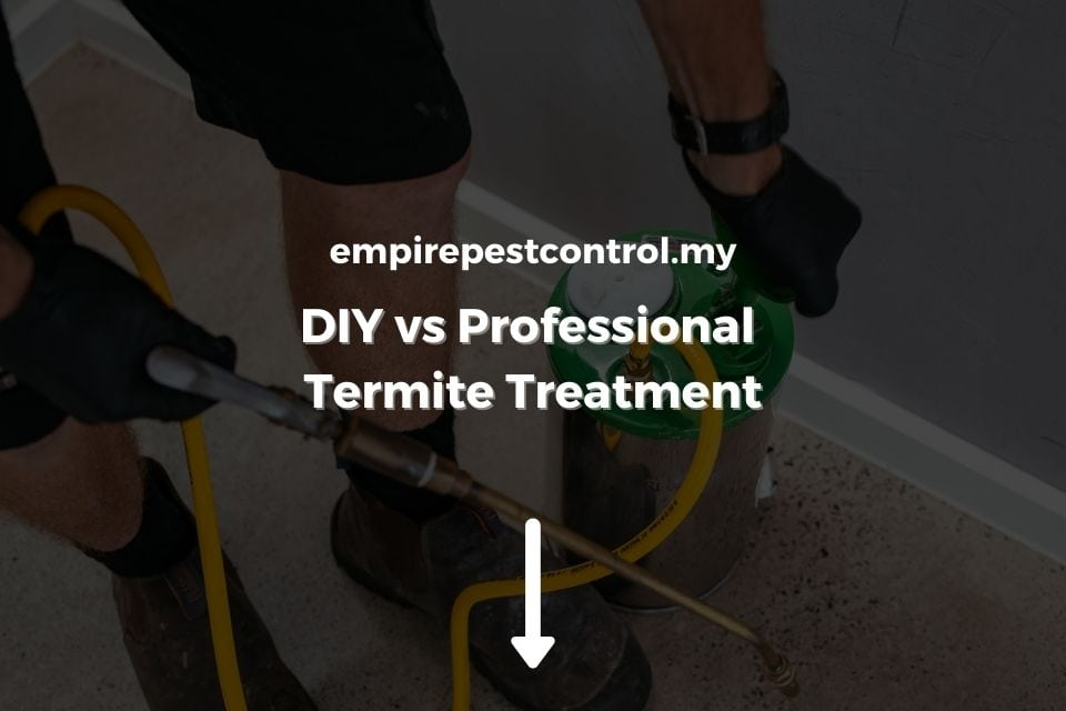 DIY vs Professional Termite Treatment