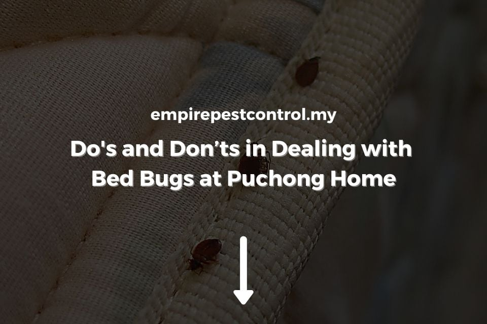 Do's and Don'ts in Dealing with Bed Bugs at Puchong Home