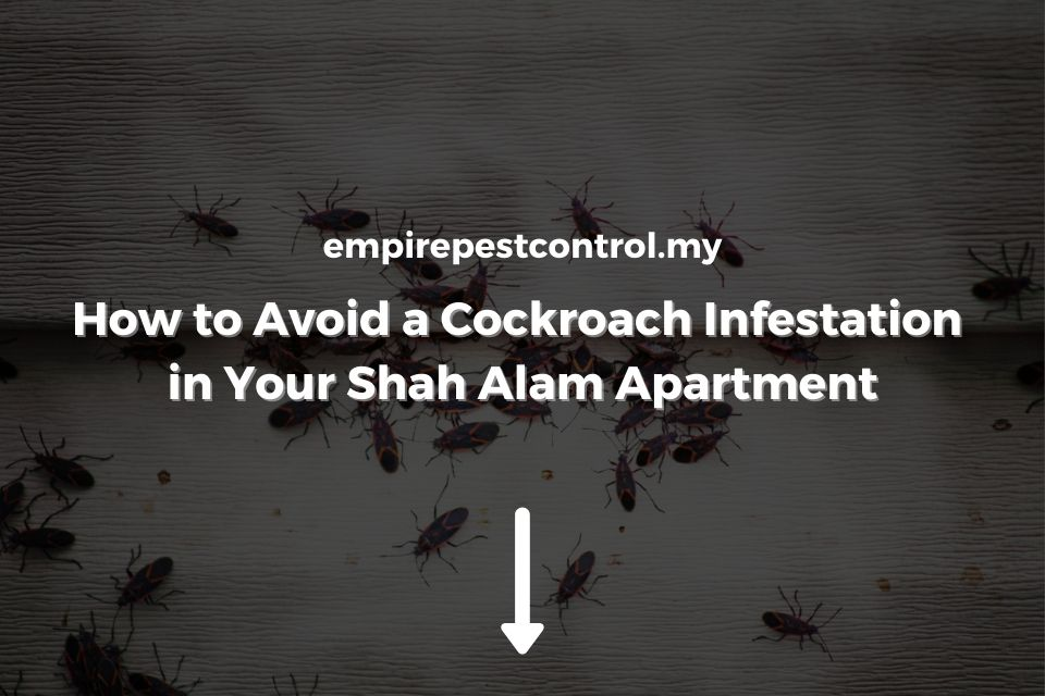 How to Avoid Cockroach Infestation in Shah Alam Apartment
