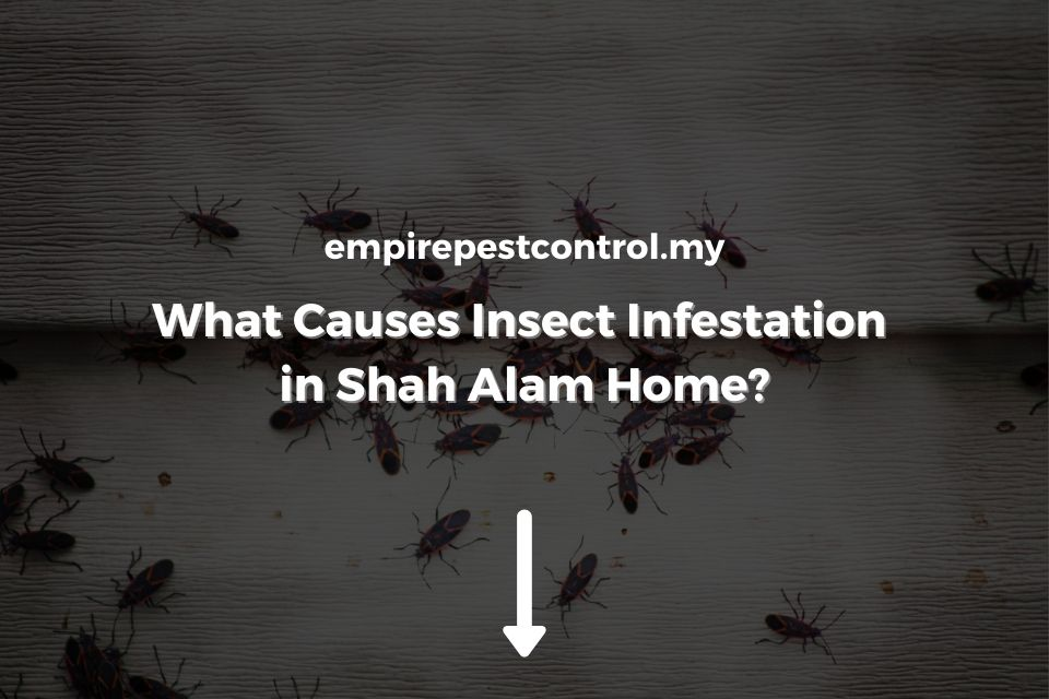 What Causes Insect Infestation in Shah Alam Home?