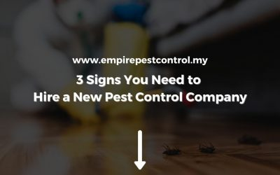 3 Signs You Need to Hire a New Pest Control Company