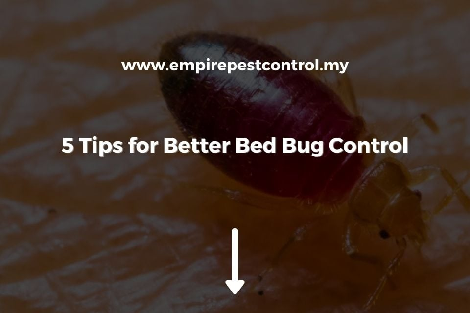 5 Tips for Better Bed Bug Control