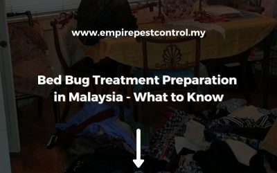 Bed Bug Treatment Preparation in Malaysia – What to Know