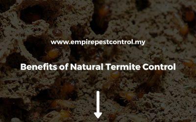 Benefits of Natural Termite Control