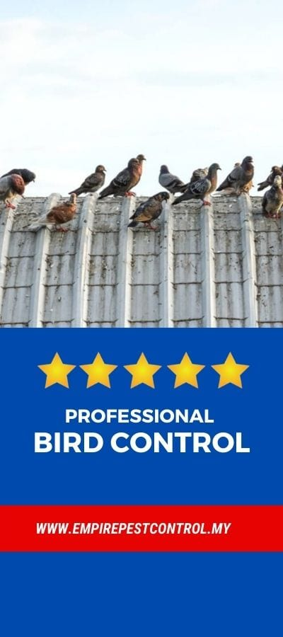 Bird Control Malaysia