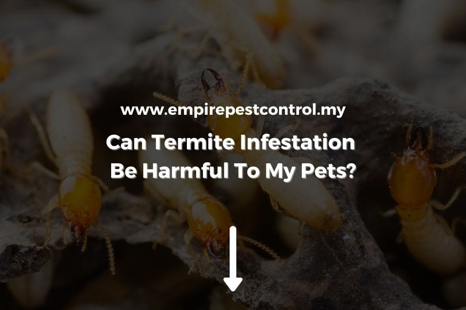 Can Termite Infestation Be Harmful To My Pets