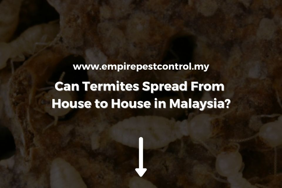 Can Termites Spread From House to House in Malaysia