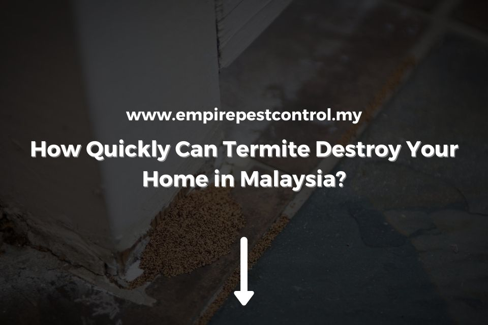 How Quickly Can Termite Destroy Your Home in Malaysia
