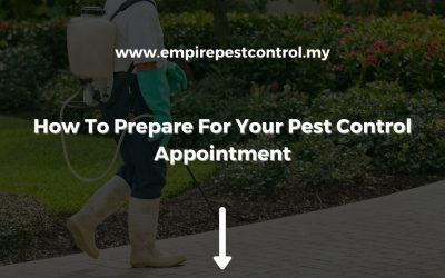 How To Prepare For Your Pest ControlAppointment