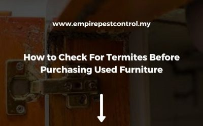 How to Check For Termites Before Purchasing Used Furniture