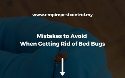 Mistakes to Avoid When Getting Rid of Bed Bugs