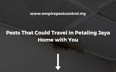 4 Hitchhiking Pests in Petaling Jaya that Could Travel Home with You