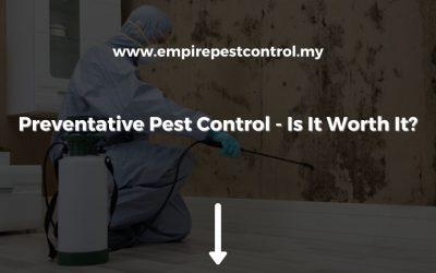 Preventative Pest Control – Is It Worth It?
