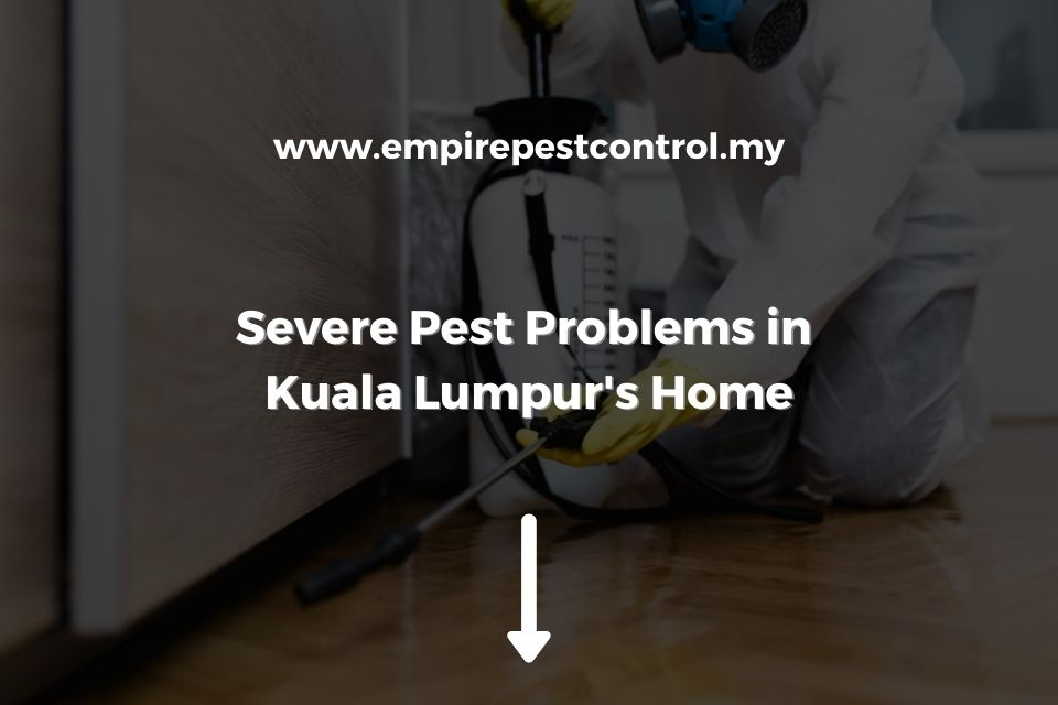 Severe Pest Problems in Kuala Lumpur Home