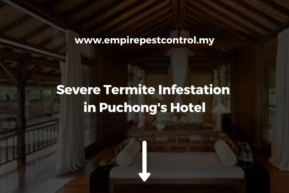 Severe Termite Infestation in Puchong Hotel