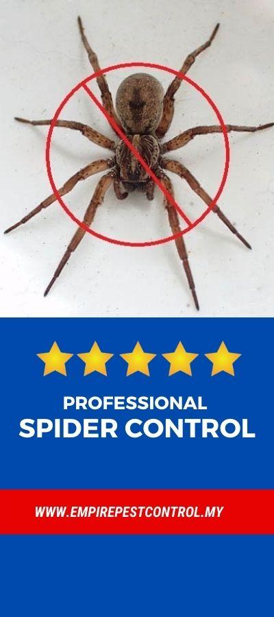 Spider Control Malaysia