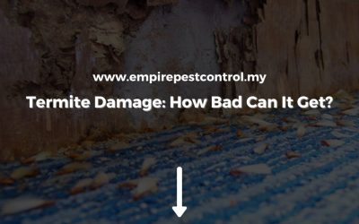 Termite Damage: How Bad Can It Get?
