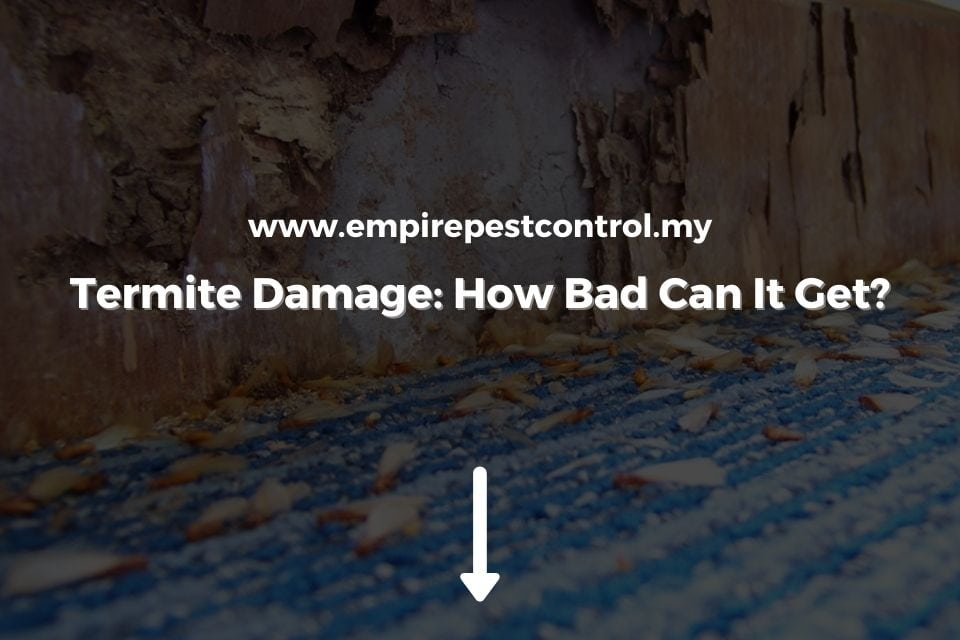 Termite Damage_ How Bad Can It Get_