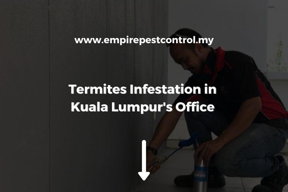 Termite Infestation in Kuala Lumpur Office