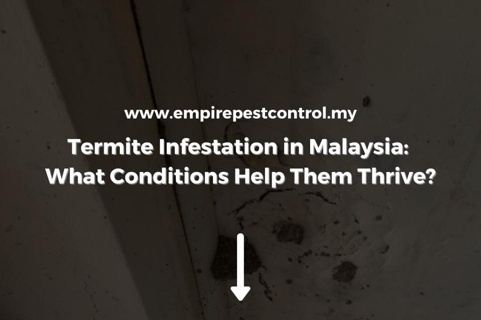 Termite Infestation in Malaysia