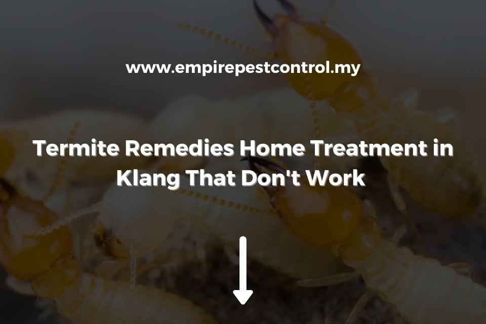 Termite Remedies Home Treatment in Klang That Don't Work
