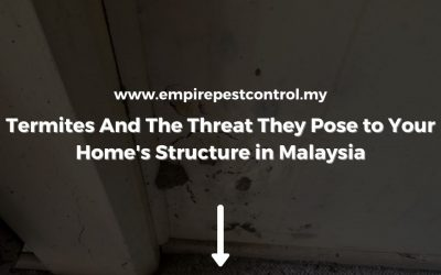 Termites And The Threat They Pose to Your Home's Structure in Malaysia