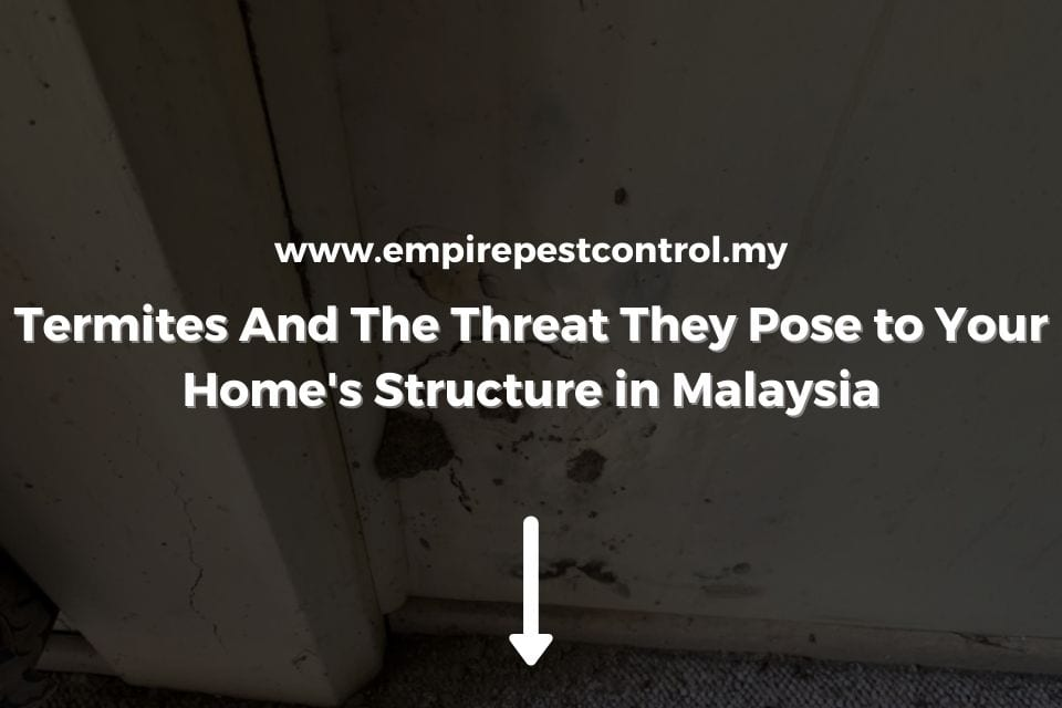 Termites And The Threat They Pose to Home Structure in Malaysia