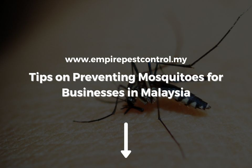Tips on Preventing Mosquitoes for Businesses in Malaysia