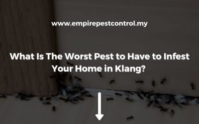 What Is The Worst Pest to Have to Infest Your Home in Klang?