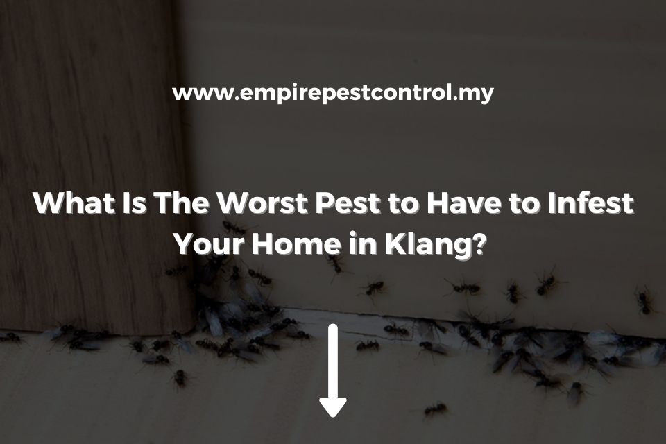 What Is The Worst Pest to Have to Infest Your Home in Klang